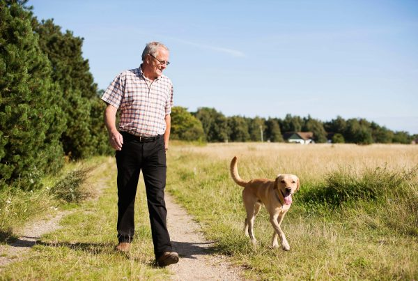 Senior man walking dog on sunny day